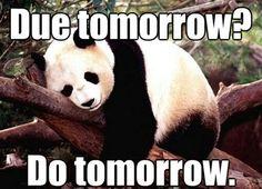 Inattentive ADHD Panda :-p