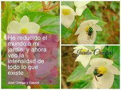 Frases,  citas.  Ortega y Gasset.  He reducido el mundo a mi jardín,  y ahora veo la intensidad de todo lo que existe.  Jardín Creativo