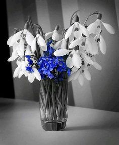 Flowers Black And White Photography Love Color Splash 58 Ideas For 2019 Flower Shop Design, Flower Pattern Design, Purple Wallpaper, Flower Wallpaper, Color Splash, Splash Photography, Photography Flowers, Peony Colors, Flower Box Gift