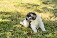Los dueños de mascotas se encuentran a menudo con el problema de los parásitos. Aquí te explicamos cómo eliminar garrapatas con manzanilla.