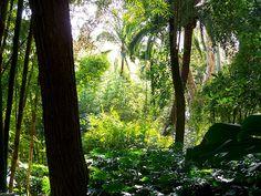 Tropical Gardens, Malaga