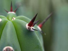 Macro shot of spiky Cactus