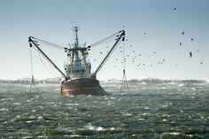 > Título: Pescando Salmones en Alaska  > Título Original: Pescando Salmones en Alaska  > Saga: -  > Autor/a: Caridad Bernal  > Editorial: ...