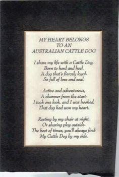 My heart belongs to an Australian Cattle Dog!