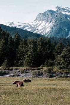 Brown Bears In Lake Clark National Park