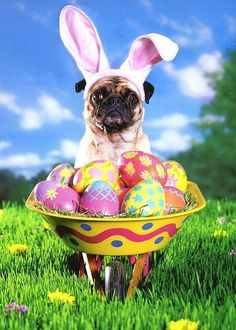 Pug with Easter Wheelbarrow Funny Easter Card - Greeting Card by Avanti Press #AvantiPress #Easter