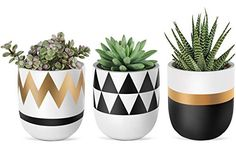 Add modern elements and green to your living space. You can use it to display your small indoor plants such as succulents, cactus Painted Plant Pots, Painted Flower Pots, Ceramic Flower Pots, Small Flower Pots, Flower Planters, House Plants Decor, Plant Decor, Pots D'argile, Small Indoor Plants