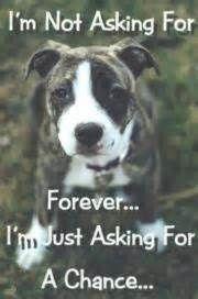 animal cruelty logos - Bing Images