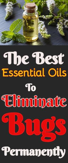 3bf22c74ef5 The Best Essential Oils For Getting Rid Of Bugs  essentialoils  cleaning   natural