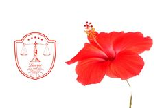 Hibiscus Flower & Lawyer Graphic