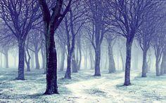 Zima, Las, Drzewa, Śnieg