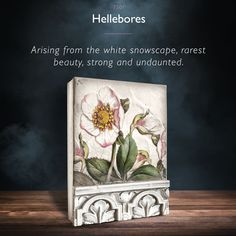Hellebores 🌷 The STUNNING new Daydream Collection from Sid Dickens will arrive in-store in March but contact Crafted Decor to pre-order NOW to ensure you don't miss out on growing your collection! Sid Dickens - Official Page