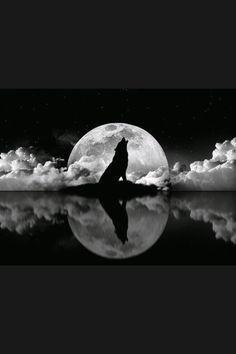 Wolf body, shadow, sitting position