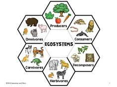 Ecosystems-Interactive Science Notebook foldable