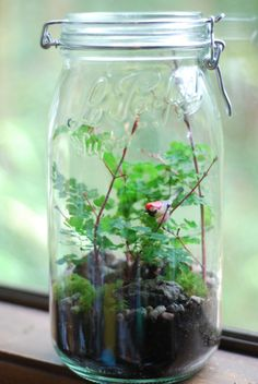 wee bird on branch fern and moss terrarium by weegreenspot on Etsy, $50.00