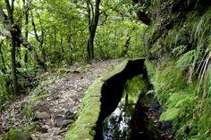 Levadas (canais construídos para abastecimento com água das nascentes) do Ribeiro Frio, Ilha da Madeira Funchal, Azores, Black Bear, Travel Destinations, Surfing, Beautiful Places, Country Roads, Tours, Plants