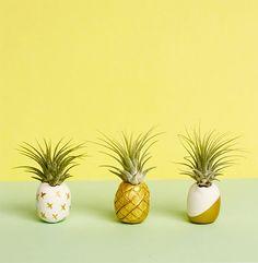 Mini DIY air plant pineapples