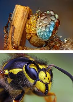Macro Photos of Insects by Ondrej Pakan | Inspiration Grid | Design Inspiration