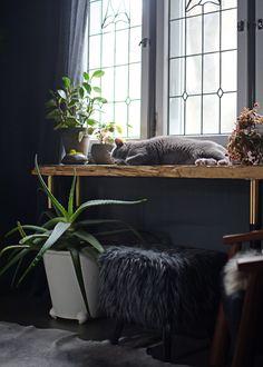 http://www.desiretoinspire.net/blog/2016/10/31/mondays-pets-on-furniture.html