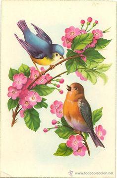✼ ✻ ✺ ✹ ✸ ✷ ₪ ❃ ❂ ❁ ❀ ✿ Pretty Birds, Beautiful Birds, Beautiful Images, Vintage Birds, Vintage Art, Illustration Mignonne, Bird Coloring Pages, Bird Artwork, Bird Silhouette