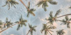 Edgars Pastel Summer Competition: Palm Trees