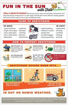 Heatstroke in dogs & cats! (Design/layout by The Design Lab, illustration by Lili Chin. Pet Care Tips, Dog Care, Happy Animals, Animals For Kids, Heat Stroke In Dogs, Normal Body, Information Poster, Dog Facts, Animal Projects