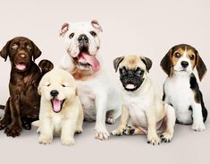 900 Ideas De Perros En 2021 Perros Mascotas Razas De Perros