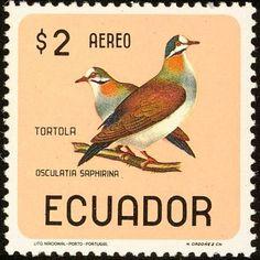 Ecuador - Tortolas