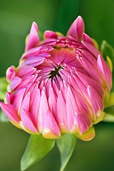 Like this beautiful flower ready to bloom, let God into your heart so that it may soar!