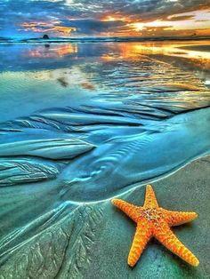 #SHELL##SEA# #NATURE#