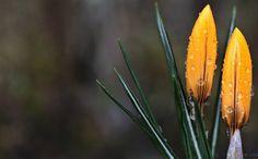 svejo.net | 10 удивителни пролетни гледки от различни точки на планетата