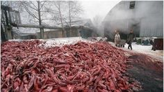 Petition · Christiane, Christiane Taubira, lawrence fabius: Anti-fur · Change.org