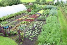 www.charlesdowding.co.uk - No dig gardening. Fantastic site!