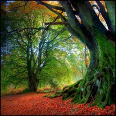 Autumn in Kinclaven, Scotland. Absolutely Love the color! Beautiful...take me there! :-D