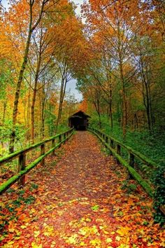 Covered bridge in beautiful fall foliage All Nature, Autumn Nature, Autumn Forest, Fall Pictures, Fall Photos, Pretty Pictures, Autumn Day, Autumn Leaves, Autumn Walks