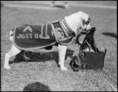 Jiggs II