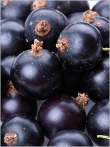 Fruits & Veggies More MattersBlack Currants: Nutrition . Selection . Storage - Fruits & Veggies More Matters : Health Benefits of Fruits & Vegetables