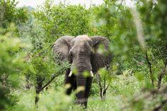 10. Elephants