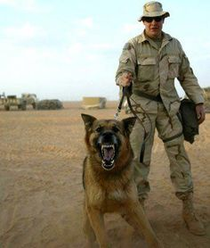 Abiding Dogs And Puppies #dogsandpals #FancyDogCollar Military Working Dogs, Military Dogs, Police Dogs, Fancy Dog Collars, German Shepherd Dogs, German Shepherds, Hiking Dogs, War Dogs, Dog Activities