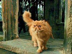"""Pattenrond est le chat roux d'Hermione. Il fait sa première apparition dans Le Prisonnier d'Azkaban quand il saute sur la tête de Ron dans la boutique de créatures magiques du Chemin de Traverse. Harry commence par le décrire ainsi """"C'était soit un très gros chat, soit un petit tigre"""" ! Harry Potter Film, Crookshanks, Mischief Managed, Hermione Granger, Hogwarts, Blog, Best Friends, Animals, Saute"""