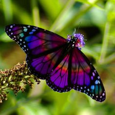 Rainbow Butterfly by PhotoMasterGreg @Flickr