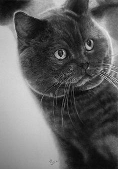 Рисунки художника Paul Lung простым карандашом на кошачью тему