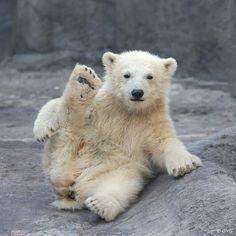 Polar Bear Yoga                                                                                                                                                      Mais