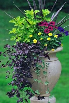 Simple Tricks for Beautiful Garden Containers Container Flowers, Container Plants, Container Gardening, Short Plants, Tall Plants, Outdoor Plants, Gardening For Beginners, Gardening Tips, Organic Gardening