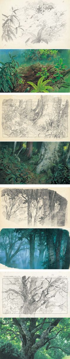 Kazuo Oga (男鹿 和雄) concept art process for Studio Ghibli Landscape Illustration, Landscape Art, Landscape Design, Illustration Art, Landscape Background, Animation Background, Studio Ghibli Background, Vegetal Concept, Plant Sketches