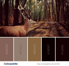 Color Palette Ideas from Wildlife Woodland Fauna Image Earth Colour Palette, Colour Pallette, Couleur Hexadecimal, Hex Codes, Forest Color, Paint Color Schemes, Paint Colors For Home, Lanyards, Coordinating Colors