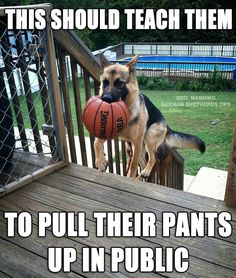 funny german shepherd pics | Okay #German #Shepherd | CUTE AND FUNNY