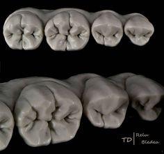 Duplicated #waxup #dental #morphology #renfert #shera