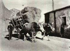 August Sander - Sardegna   #TuscanyAgriturismoGiratola
