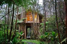 Treehouse in Fern Forest, United States. Red cinder leads you through the dense jungle to your secluded bamboo treehouse. Nestled on top of stilts 15' up in the canopy of the local flora, ascend to your retreat via the trapdoor or begin your adventure in Volcano National Park 10 miles aw...
